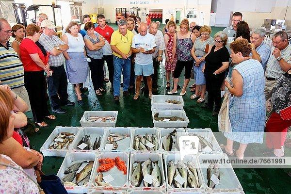 Fischmarkt  Galicien  Spanien