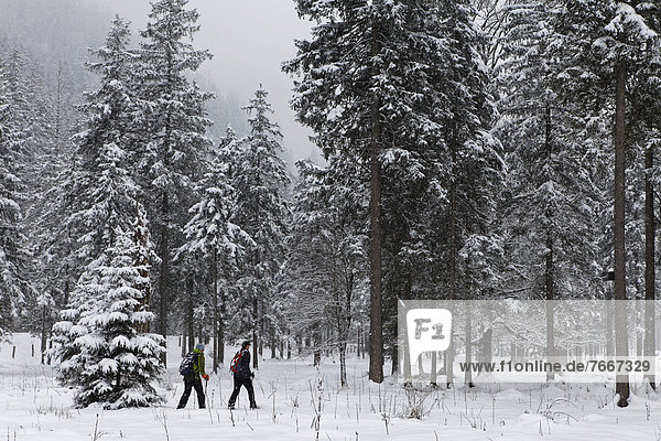 Schneeschuhwandern im Klausbachtal  Nationalpark Berchtesgaden  Berchtesgadener Land  Bayern  Deutschland  Europa Schneeschuhwandern im Klausbachtal, Nationalpark Berchtesgaden, Berchtesgadener Land, Bayern, Deutschland, Europa