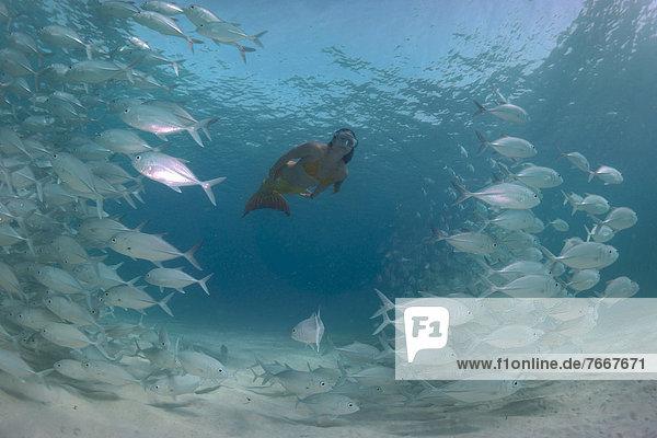 Frau Kleidung Philippinen Lagune Meerjungfrau Fischschwarm