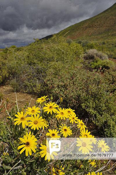 Südliches Afrika  Südafrika  Afrika  Namaqualand