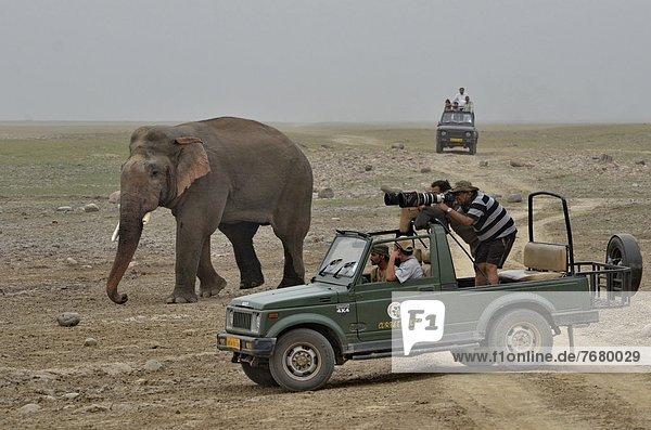 nahe  Verkehr  Fernverkehrsstraße  Fotograf  Elefant  Indien