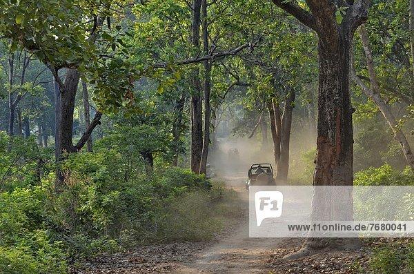 Verkehr  fahren  Fernverkehrsstraße  Wald  Indien  mitfahren
