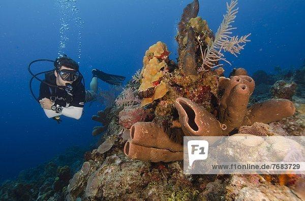 Fröhlichkeit  Karibik  Westindische Inseln  Mittelamerika  Riff  Schönheit