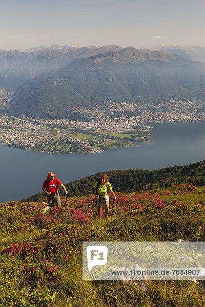 Ein Mann und eine Frau beim Wandern inmitten blühender Alpenrosen am Monte Covreto  Blick über den Lago Maggiore auf das Maggia-Delta  Ascona und Locarno  Tessin  Schweiz  Europa