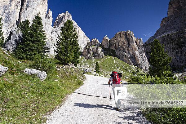 Wanderer beim Aufstieg zum Kesselkogel  hinten der Rosengarten  Trentino  Italien  Europa