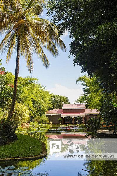 Eingang Karibik Guadeloupe Kleine Antillen Lilie Teich Eingang,Karibik,Guadeloupe,Kleine Antillen,Lilie,Teich