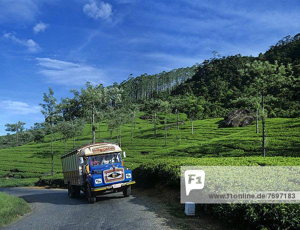 Bus fährt durch Teeplantage  Teeanbaugebiet im Hochland