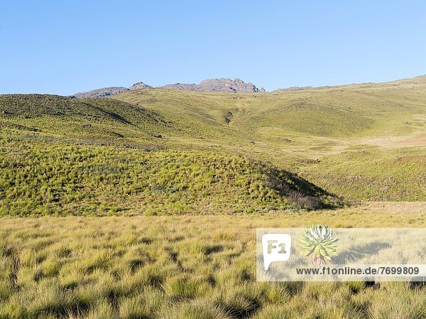 Ostafrika  Nationalpark  Berg  Mittelpunkt  Gebirgszug  in der Höhe  UNESCO-Welterbe  Afrika  Highlands  Kenia  Sekunde  Vulcano
