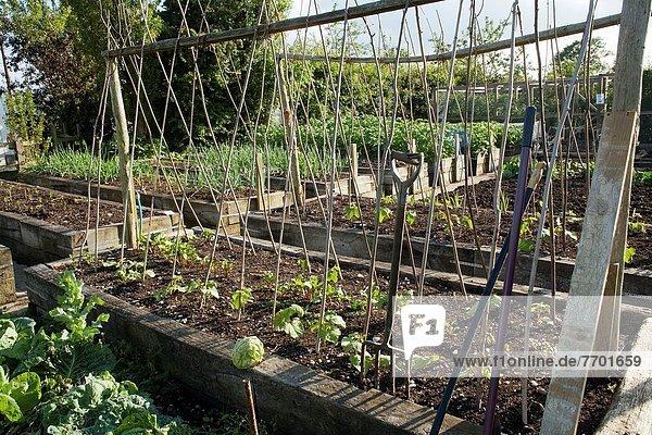 Gemüse Bett Garten Holz