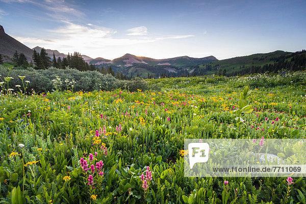 Wildblumen im ländlichen Raum
