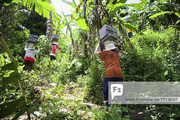 Mörtel  Frau  tragen  schwer  Indonesien