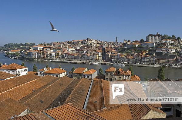 Bird Flying Over Rooftops Of Oporto