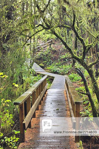 folgen  Holzweg  ungestüm  Insel  Pazifischer Ozean  Pazifik  Stiller Ozean  Großer Ozean  britisch  Kanada  Regenwald  Ucluelet  Vancouver