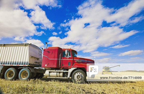 arbeiten  Bauernhof  Hof  Höfe  Mähdrescher  Feld  Lastkraftwagen  Fokus auf den Vordergrund  Fokus auf dem Vordergrund  Canola