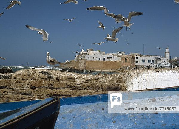 Seagulls With Medina Essaouira