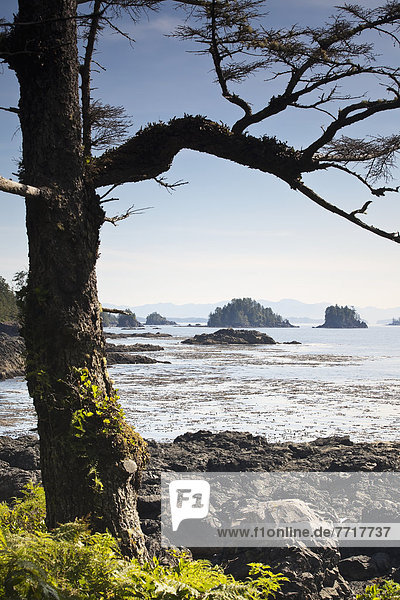 West coast trail in ucluelet Vancouver island british columbia canada
