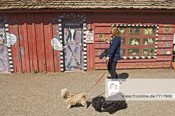 A Woman Walking Two Dogs In Downtown Sedona  Arizona  Usa