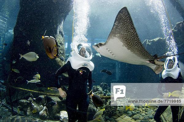 Mensch Menschen Abenteuer Unterwasseraufnahme Meer Experiment Reise Hawaii Oahu
