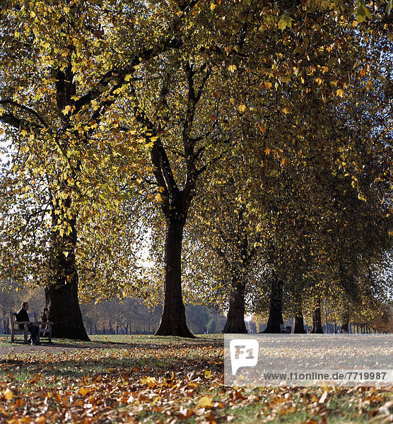 Autumn Foliage In Hyde Park