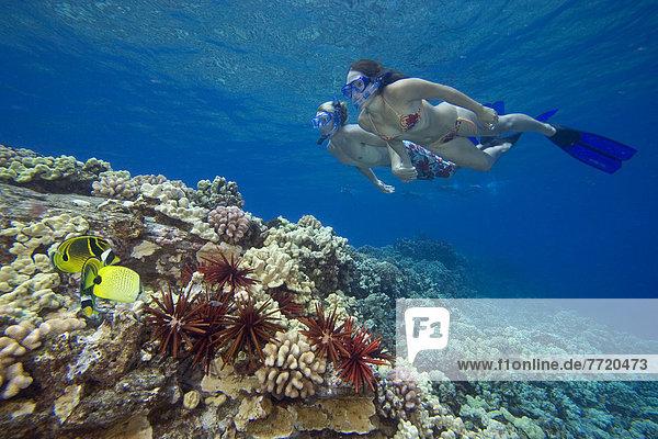 Freiheit über Hawaii Riff