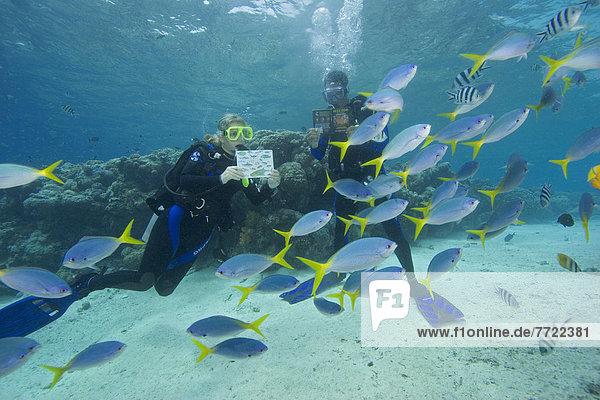 Fisch Pisces Buch umgeben Identifikation Taucher Taschenbuch Mikronesien Karte Riff