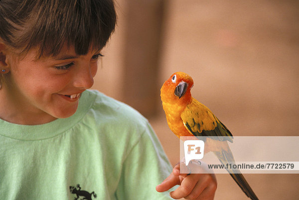 Papagei  Hawaii  Oahu