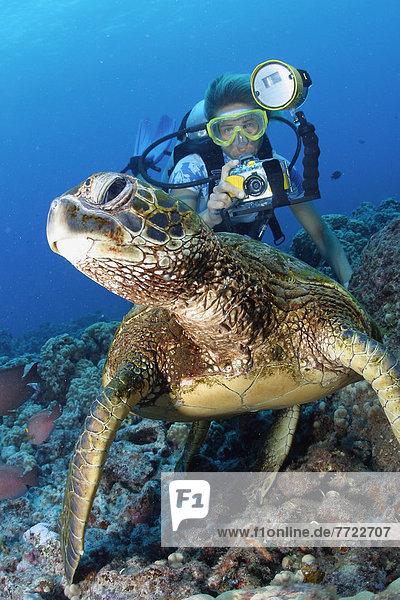 Wasserschildkröte Schildkröte hoch oben benutzen grün Hawaii