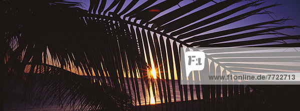 Silhouette Of Palm Tree Fronds