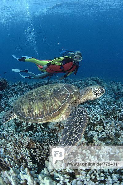 Hintergrund schwimmen Taucher Hawaii Maui