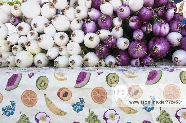 Vereinigte Staaten von Amerika  USA  Geländer  Garten  Renovierung  Pflanze  Zwiebel  Landwirtin  Markt  New Mexico  Santa Fe