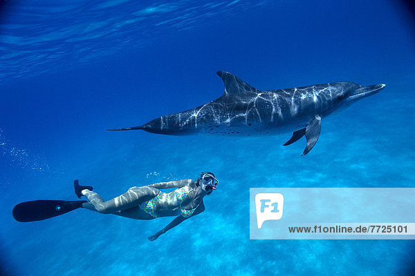 Atlantic Spotted Dolphin And Snorkeler Underwater Near Surface (Stenella Attenuata) C2003