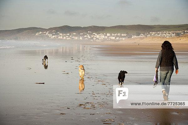 gehen  Strand  Großbritannien  Hund  Sand  North Devon  Putsborough Sands