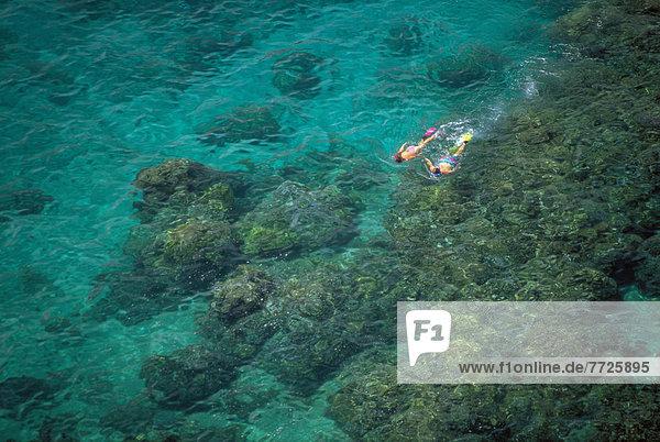entfernt  über  schnorcheln  Ansicht  Distanz  Hawaii  Maui  Riff
