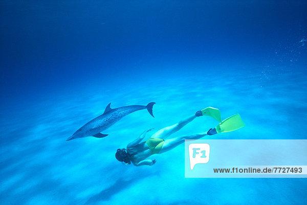 Delphin  Delphinus delphis  nahe  Sand  Karibik  Boden  Fußboden  Fußböden  Punkt  schnorcheln  Dalbe  Schnorchler