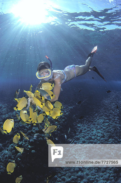 Hawaii  Woman Snorkeler Feeding Butterflyfish  Sunburst And Reflections