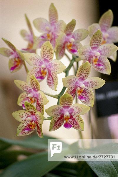 Einkaufszentrum  weiß  Pflanze  pink  Orchidee