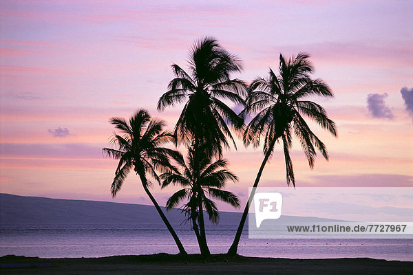Sonnenuntergang  Silhouette  gelb  Himmel  lila  pink  Hawaii  Molokai