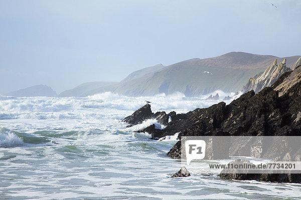 nahe  Wasser  Strand  Küste  rauh  Dunquin  vorwärts  Kerry County  Dingle  Irland  Halbinsel
