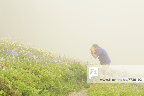 nahe  Skyline  Skylines  Mann  folgen  wandern  Wildblume  fotografieren  Berg  Mount Rainier Nationalpark  Paradies