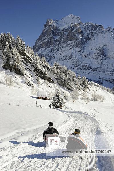 Schlitten fahren alpine Piste hinunter  Wetterhorn hinten  Schweiz  Europa