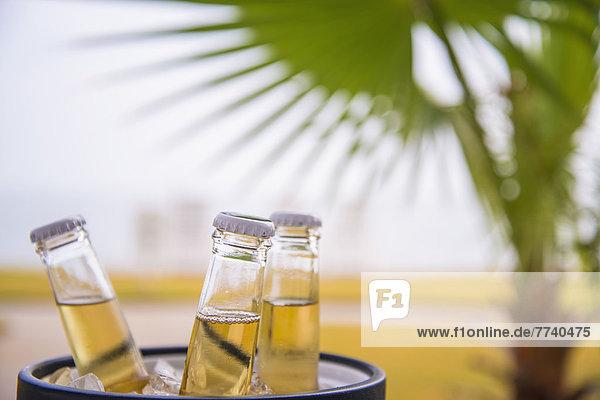 USA  Texas  Bierflaschen im Eiskübel vor Palmblatt
