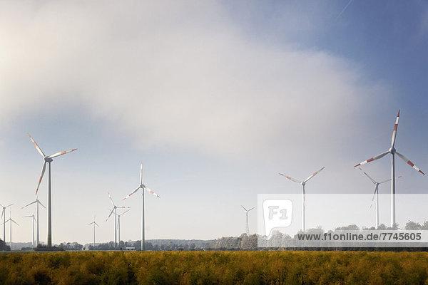 Deutschland  Blick auf Windkraftanlage im Kornfeld bei Sassenberg