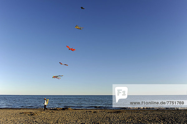 blauer Himmel wolkenloser Himmel wolkenlos Mann Strand Meer Größe blauer Himmel,wolkenloser Himmel,wolkenlos,Mann,Strand,Meer,Größe