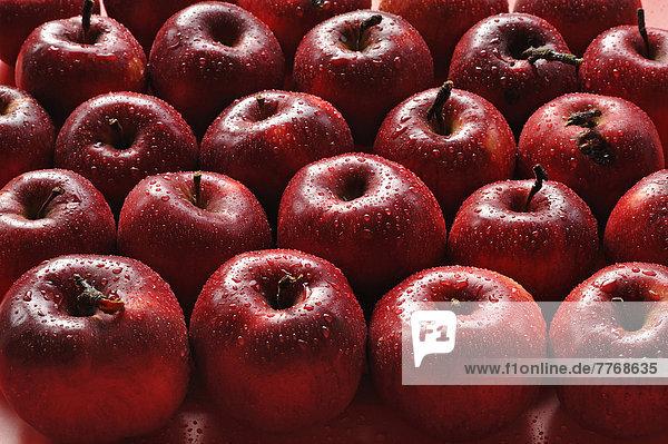 Bioäpfel  Purpurroter Cousinot Apfel