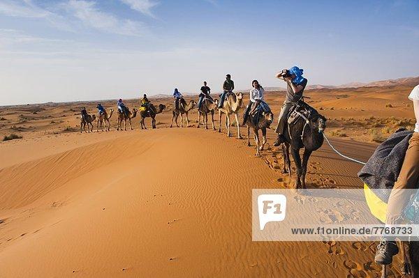 Nordafrika  fahren  Tourist  Wüste  Afrika  Kamel  Marokko  mitfahren