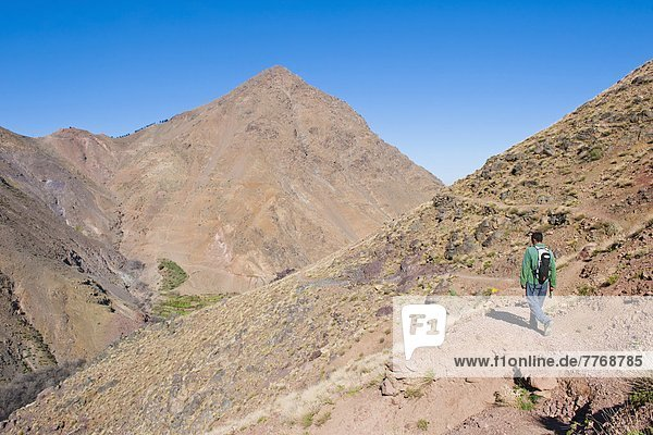 Tour guide trekking between Tacheddirt and Tizi n Tamatert  High Atlas Mountains  Morocco  North Africa  Africa