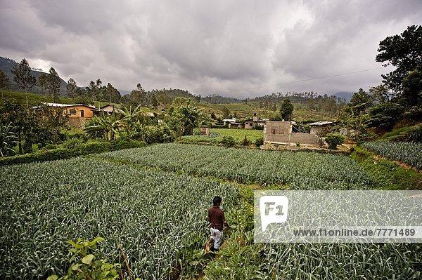 Wachstum  Bauer  Student  Lauch  Asien  Sri Lanka