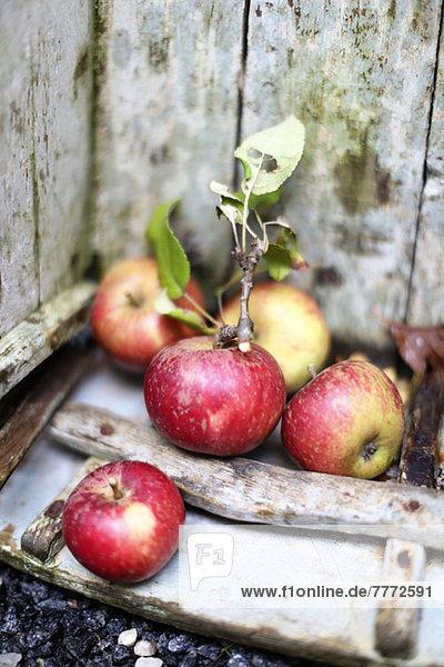 Selektiver Fokus von Äpfeln auf Holz