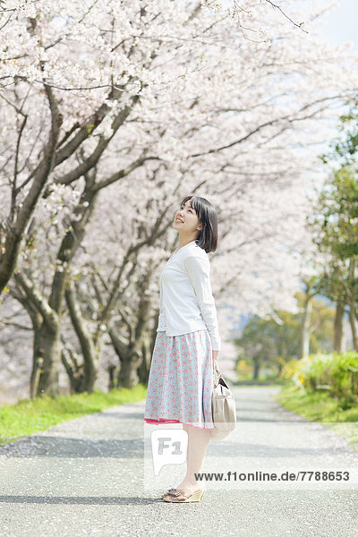 stehend  Frau  Baum  Kirsche  Blüte  jung