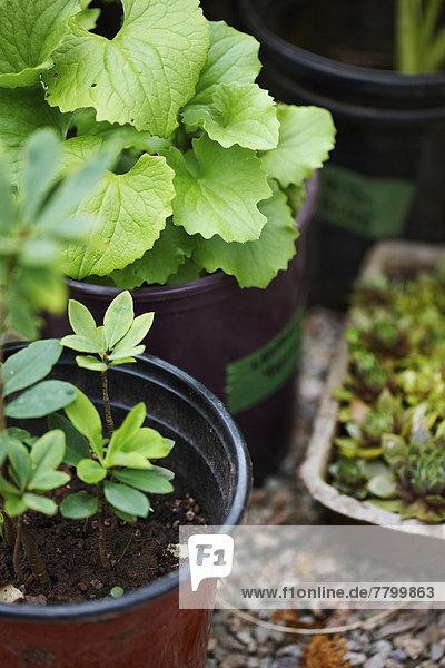 Pflanze  Garten  Blumentopf  Außenaufnahme  keimen  Kanada